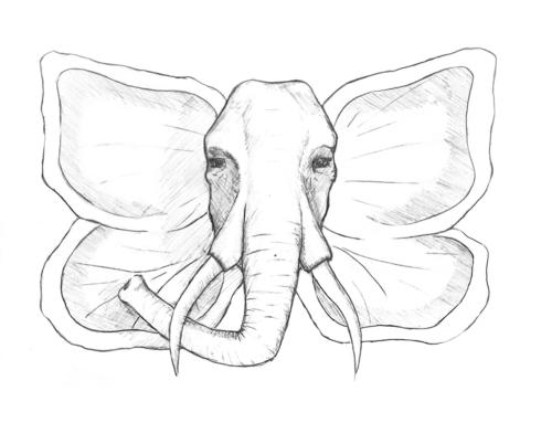 Metamorphose Elefant und Schmetterling